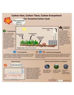 Anya Kazanjian - Carbon Cycle Poster Final