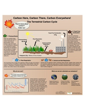Anya Kazanjian - Carbon Cycle Poster Final